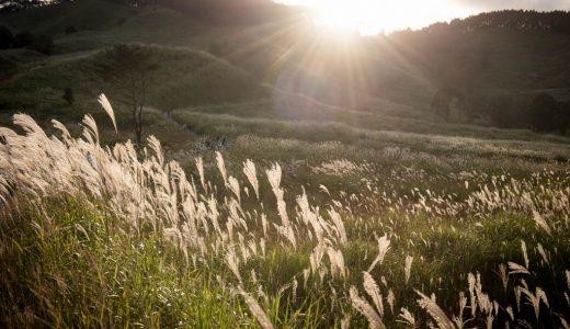一面に広がる銀色の絨毯!兵庫・砥峰高原のススキを撮ってきた話。