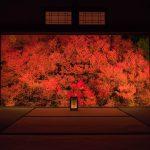 紅く燃ゆる兵庫の秋!但馬安国寺のドウダンツツジを撮ってきた話。