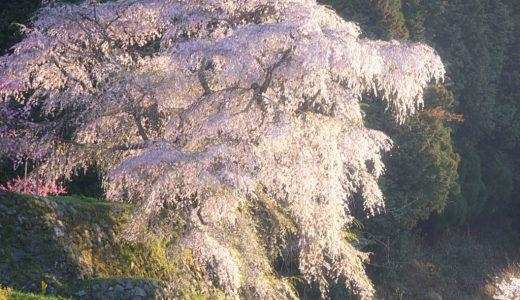 数百年の歴史を感じる春の風景!奈良県宇陀市の一本桜を撮ってきた話。